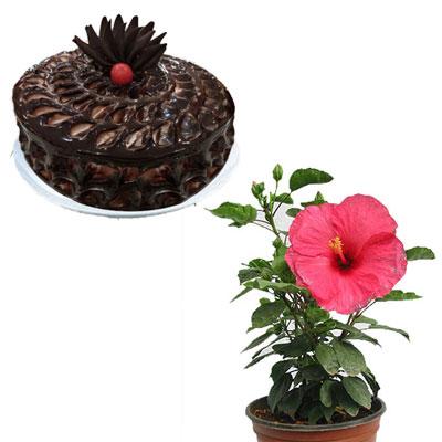 Round Shape Dark Chocolate Cake 1kg Hibiscus Plant Pink Send