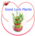 Good Luck Plants
